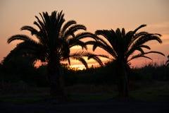 Zwei Palmen bei Sonnenuntergang Stockfotos