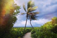 Zwei Palmen, die am Strand sich umarmen Stockfotos