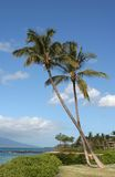 Zwei Palmen in Maui Lizenzfreies Stockbild
