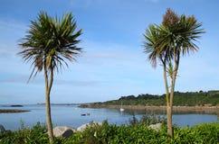 Zwei Palmen, Porthcressa Inseln von Scilly. Stockfotos