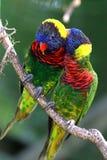 Zwei Papageien Stockfotografie