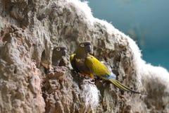 Zwei Papageien Stockbilder