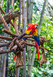 Zwei Papageien Lizenzfreie Stockfotografie