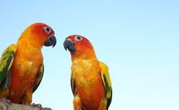 Zwei Papageien auf Bauholz Sittich auf dem Holz Netter grüner Vogel an stockbilder