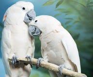 Zwei Papageien, die auf einer Niederlassung sitzen Stockfotografie