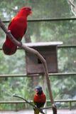 Zwei Papageien, die im Käfig sitzen stockbilder
