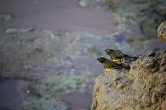 Zwei Papageien, die unter Meer fliegen Lizenzfreie Stockbilder