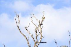 Zwei Papageien in einem toten Baum Lizenzfreies Stockfoto
