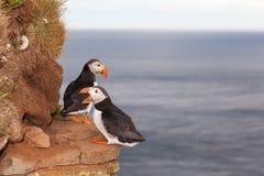 Zwei Papageientauchervögel gegen Meer in Island lizenzfreies stockfoto