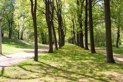 Zwei Pfade in einem Wald Stockfotos