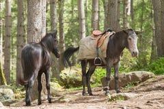 Zwei Pferde auf der Straße zu Taktsang-Kloster Stockfotografie
