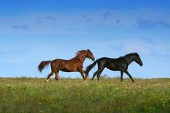 Zwei Pferde auf der Wiese Stockbild