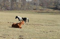 Zwei Pferde auf einem Bauernhof Lizenzfreie Stockbilder