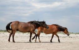 Zwei Pferde auf einem Strand Stockbilder