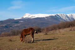 Zwei Pferde auf einer Weide gegen Berge Stockfotografie