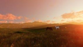 Zwei Pferde auf grüner Wiese, schöner Sonnenaufgang stock abbildung