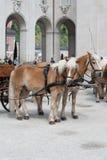 Zwei Pferde betriebsbereit, Wagen in Salzburg zu ziehen, Stockbilder