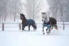 Zwei Pferde, die auf nebelhaftem Morgen des Schnees laufen Stockfotos