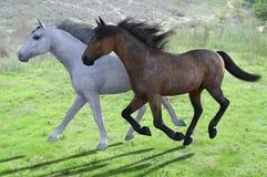 Zwei Pferde, die durch grüne grasartige Felder laufen Lizenzfreie Stockfotos