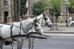 Zwei Pferde, die Wagen ziehen stockbilder