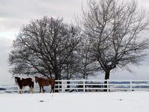 Zwei Pferde an einem Winter-Tag Lizenzfreie Stockbilder