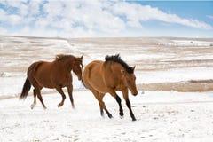 Zwei Pferde im Winter Stockbild