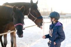 Zwei Pferde in levada Koppel am Winter Stockfoto
