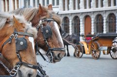 Zwei Pferde mit Fahrzeug lizenzfreie stockbilder