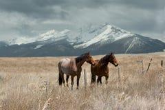 Zwei Pferde nähern sich den felsigen Bergen Lizenzfreies Stockfoto