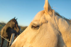 Zwei Pferde am Sonnenuntergang Stockbild