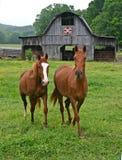 Zwei Pferde u. Steppdecken-Scheune Lizenzfreie Stockfotografie