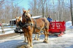 Zwei Pferde und ein Pferdeschlitten. Lizenzfreies Stockbild