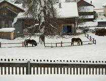 Zwei Pferde vor einem Bauernhaus im Winter Lizenzfreies Stockbild