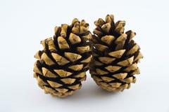 Zwei Pinecones Stockbild