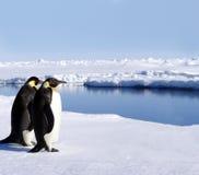 Zwei Pinguine in Antarktik stockbild