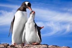 Zwei Pinguine in Antarktik Stockbilder