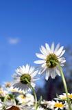 Zwei Podien, die sich zurück auf einen blauen Himmel drehen Lizenzfreies Stockfoto