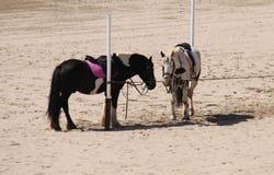 Zwei Pony Horses Lizenzfreies Stockfoto