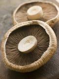 Zwei Portobello Pilze Stockbilder