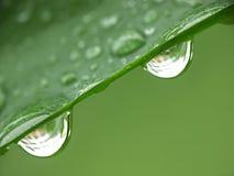 Zwei Regentropfen stockbilder