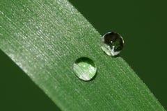 Zwei Regentropfen Stockfoto