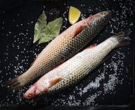 Zwei rohe Fische mit Zitrone und Salz auf einem schwarzen Hintergrund Stockfotos