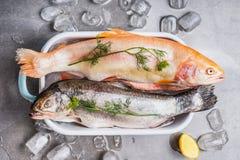 Zwei rohe ganze Forellen im Behälter mit Eiswürfeln und kochen Bestandteilen auf konkretem Steinhintergrund, Draufsicht stockfotos