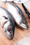 Zwei roher Fisch der Makrele geht Nahaufnahme voran Stockbilder