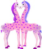 Zwei rosa Giraffen Stockbild