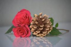 Zwei rosa Rosen und ein Kiefernkegel Stockfoto