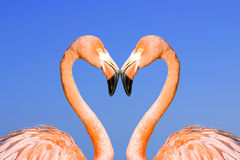 Zwei rosafarbene Flamingos Stockbilder