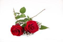 Zwei Rosen Lizenzfreies Stockfoto