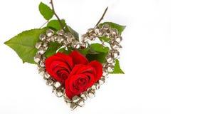 Zwei Rosen für Valentinsgruß Lizenzfreie Stockbilder