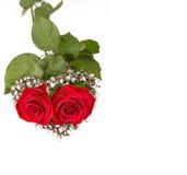 Zwei Rosen für Valentinsgruß Stockfotografie
